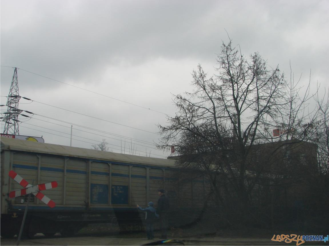 chartowo 3  Foto: