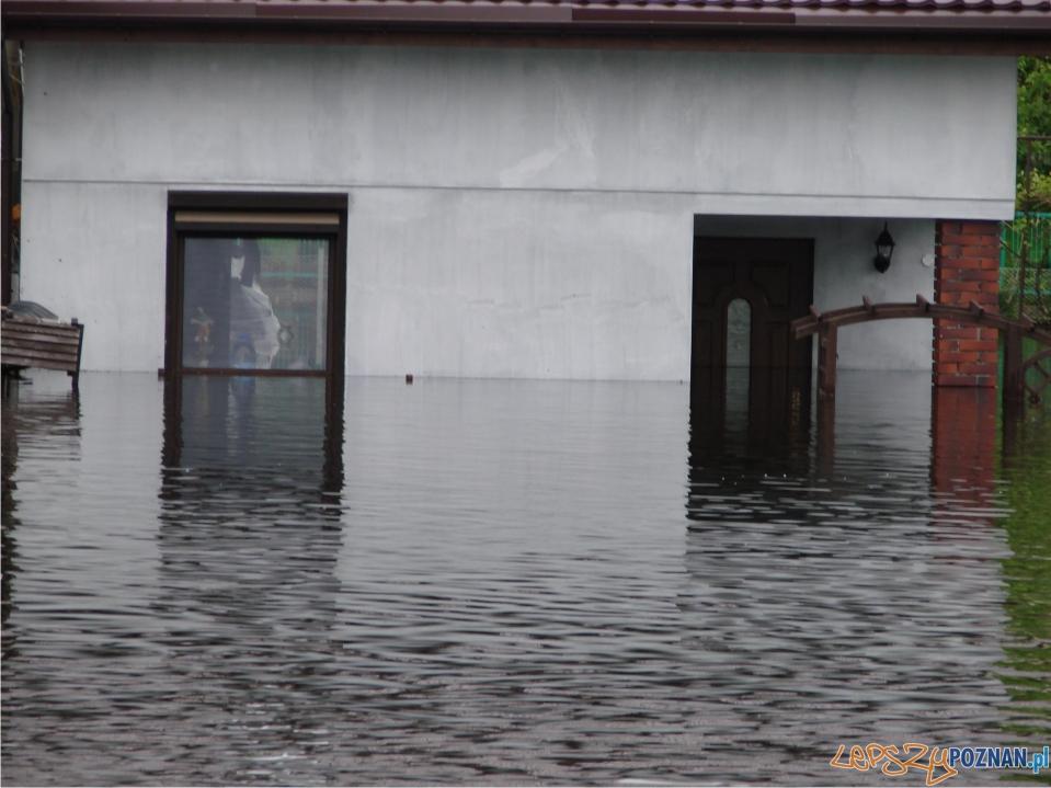rekordowy poziom Warty - zalane ogródki działkowe  Foto: lepszyPOZNAN.pl / ag