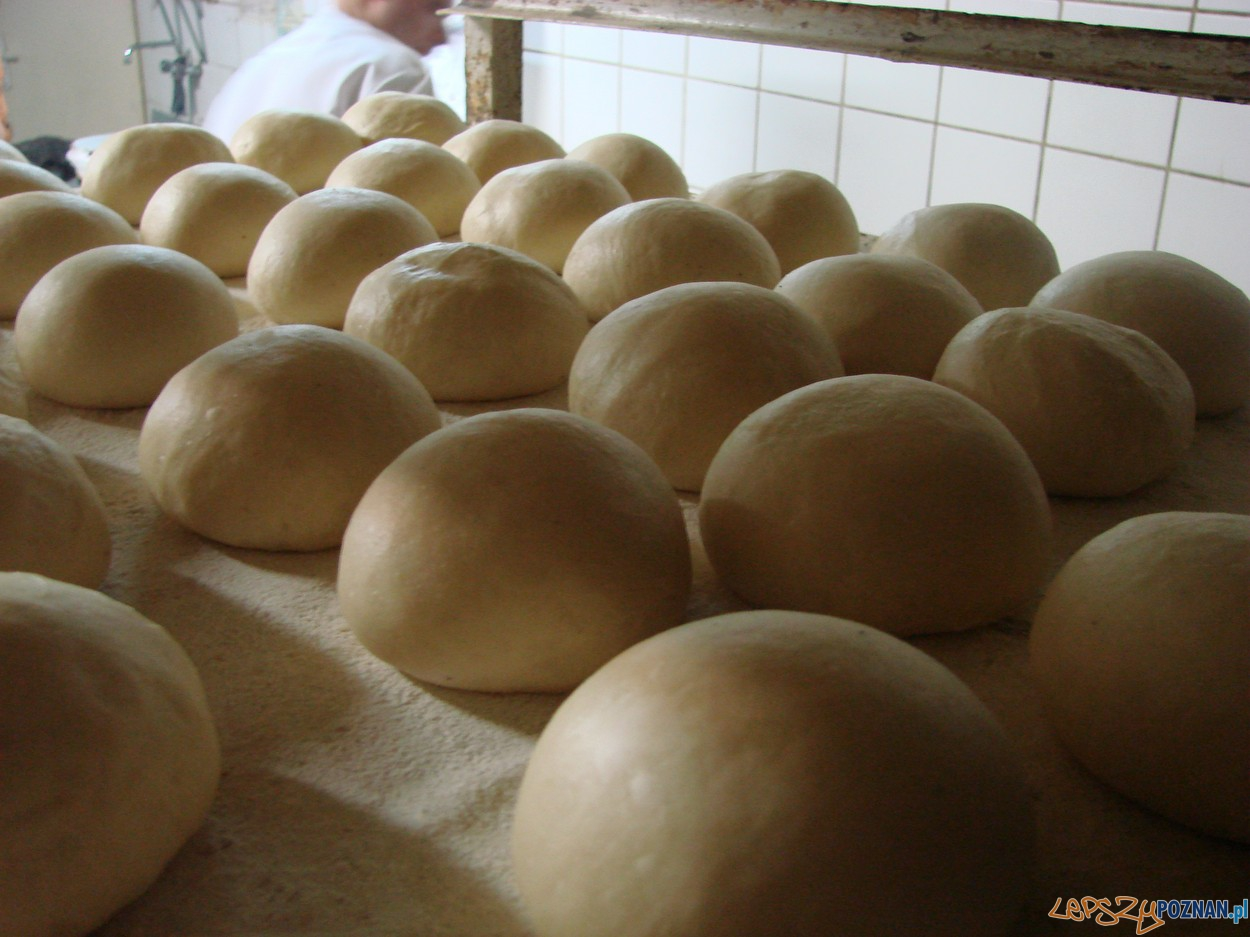 Pączki - rosną w cieple  Foto: lepszyPOZNAN.pl / ag