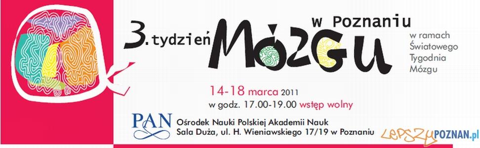 mozg  Foto: