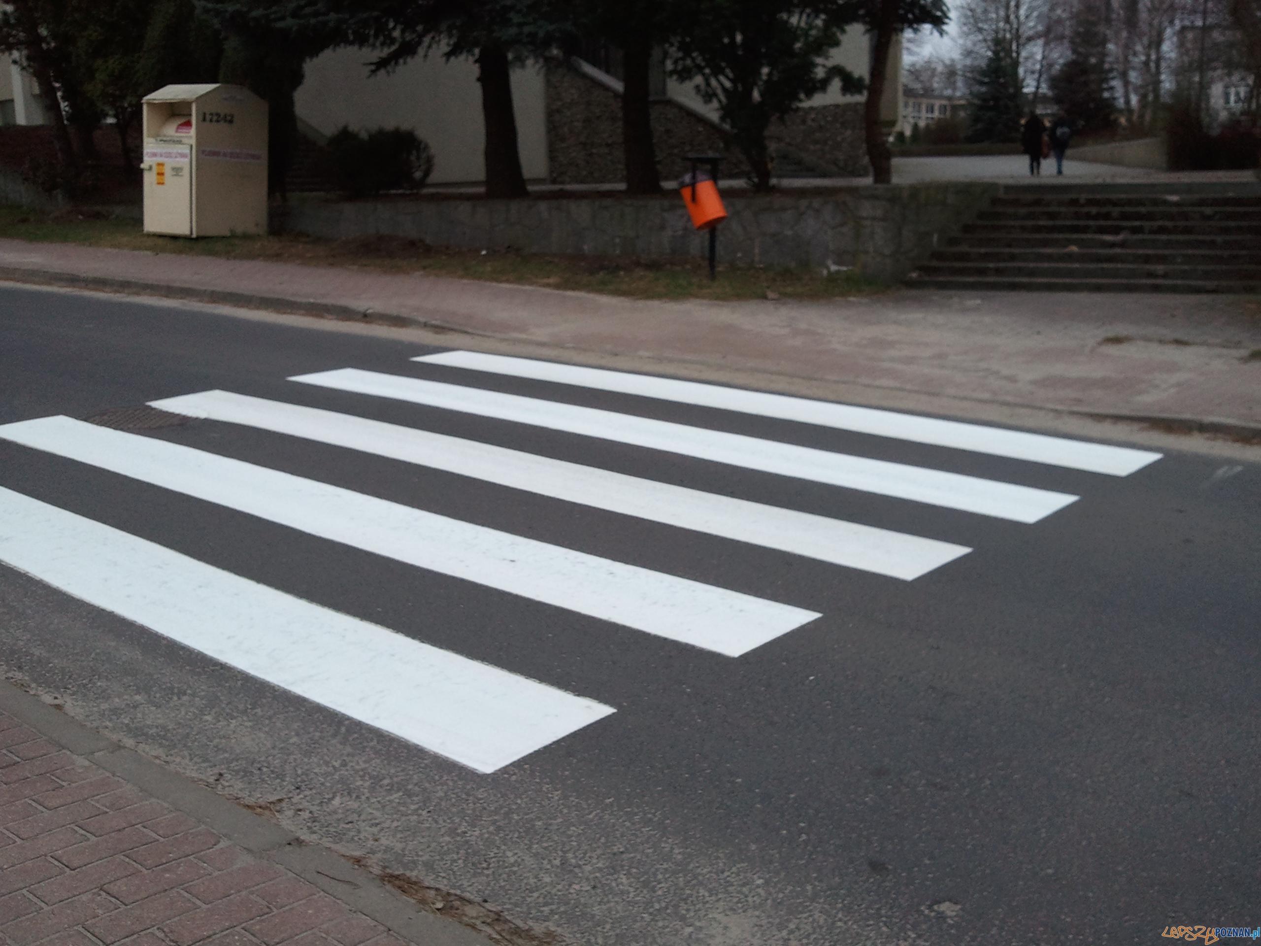 Zebra w Antoninku na ulicy Światopełka  Foto: lepszyPOZNAN.pl