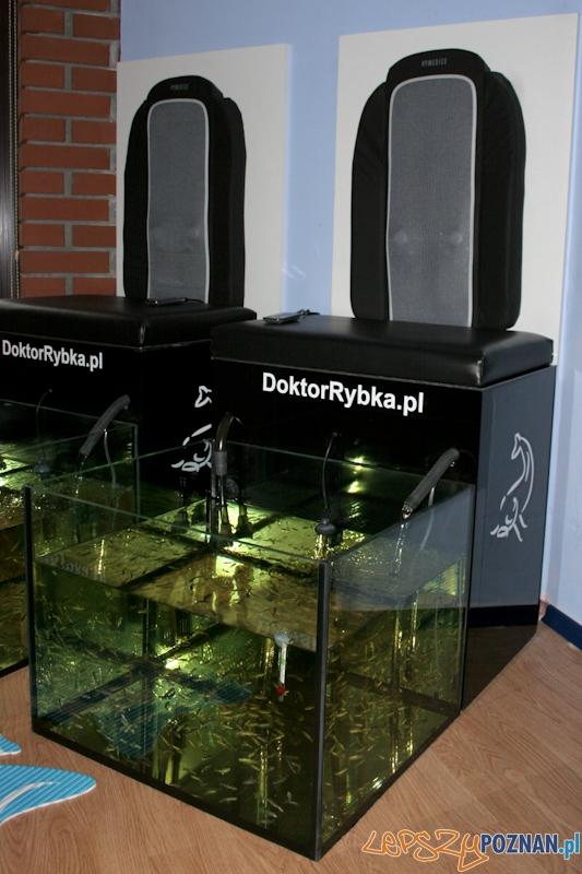 Doktor Rybka - kuracja Fish Pedding  Foto: LepszyPOZNAN.pl / Paweł Rychter