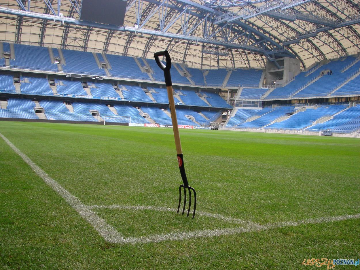 murawa stadion miejski widły  Foto: lepszyPOZNAN.pl / ag