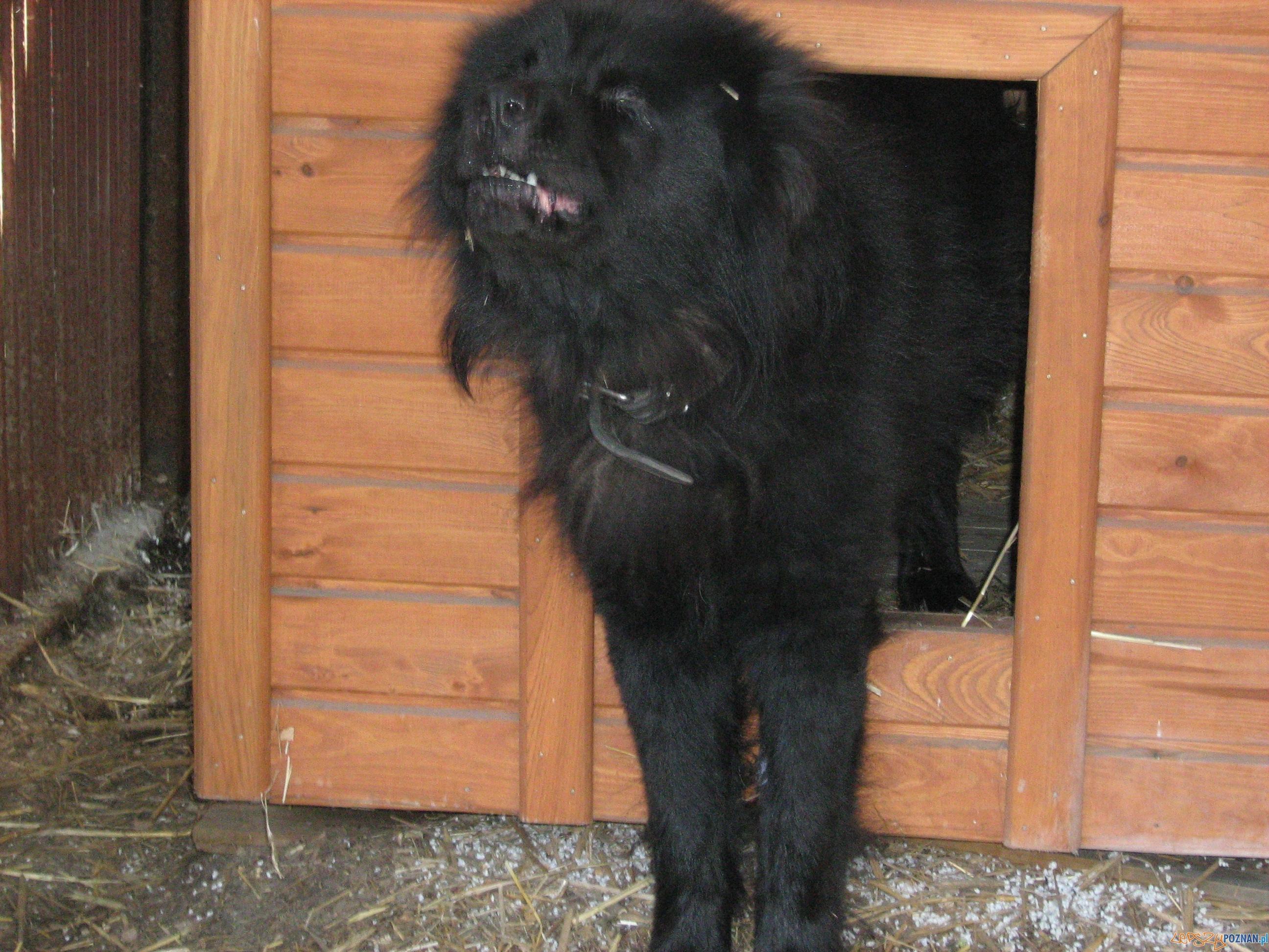 Porzucony pies  Foto: Straż Miejska w Puszczykowie