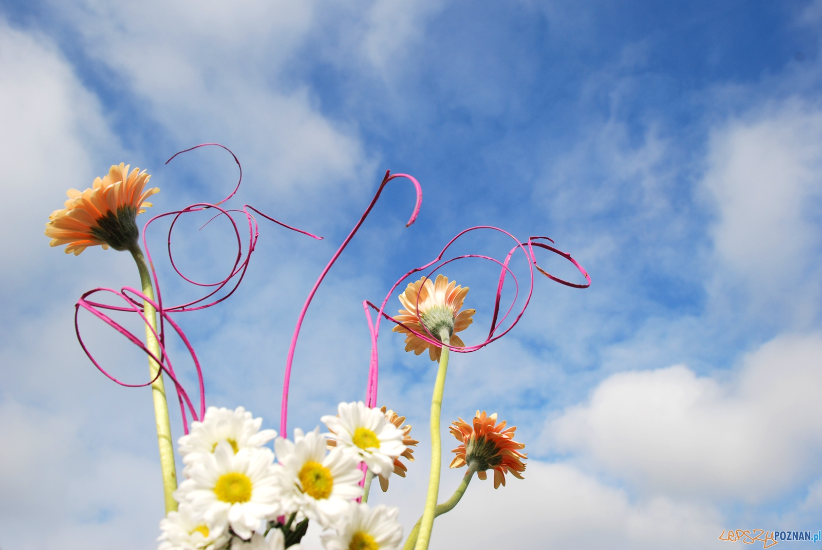 kwiaty  Foto: sxc