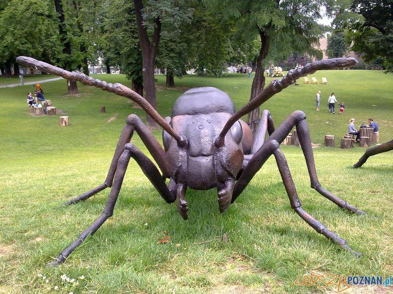 Gigantyczne owady w Starym Browarze (10)  Foto:
