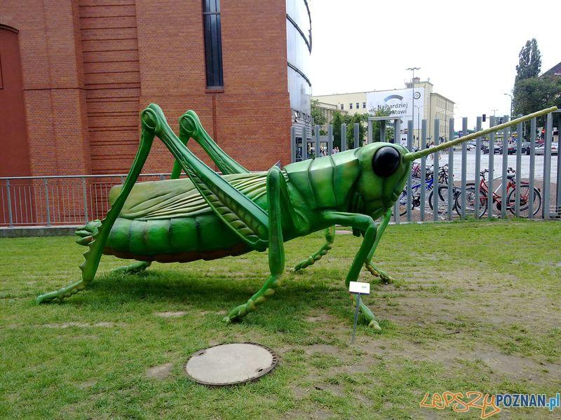 Gigantyczne owady w Starym Browarze (14)  Foto: