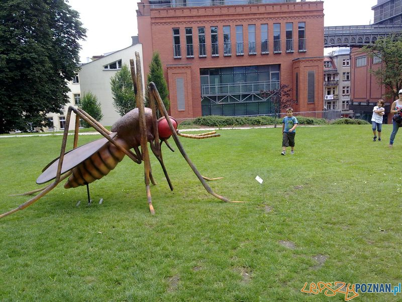 Gigantyczne owady w Starym Browarze (7)  Foto: