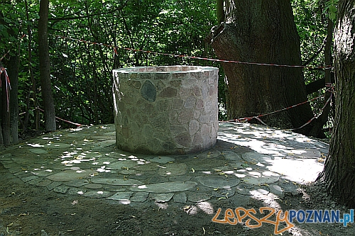 Studnia Napoleona  Foto: UMiG Mosina