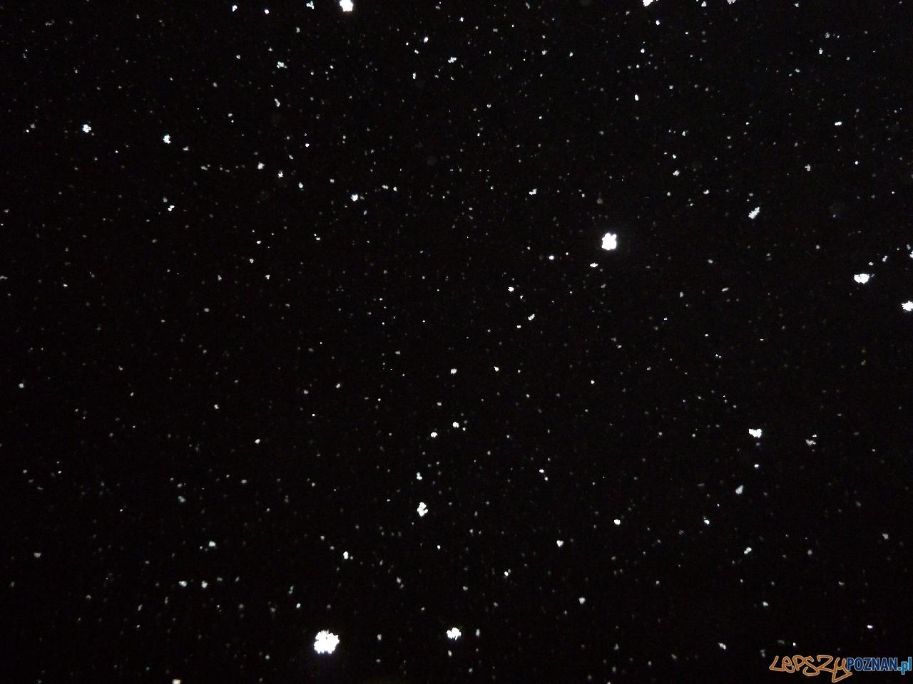 Nocny śnieg...  Foto: Maciej Koterba