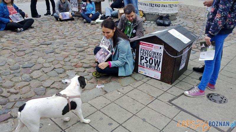 Przykuli się do budy - akcja przeciwko dręczeniu zwierząt  Foto: TD