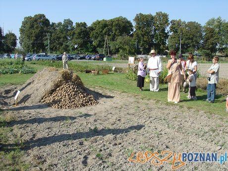 Święto Pyry w Szreniawie  Foto: Muzeum w Szreniawie