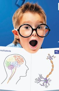 Focus pobudza neurony  Foto: