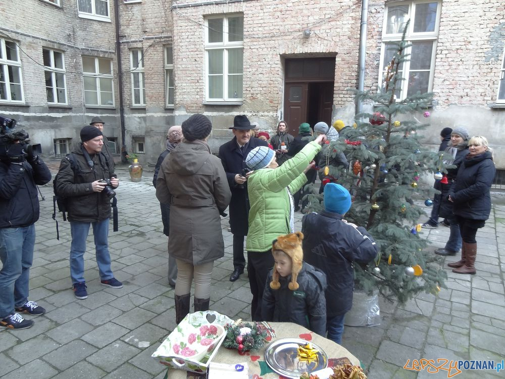 Choinki na podsumowanie akcji Omnień swoje podwórko  Foto: UMP