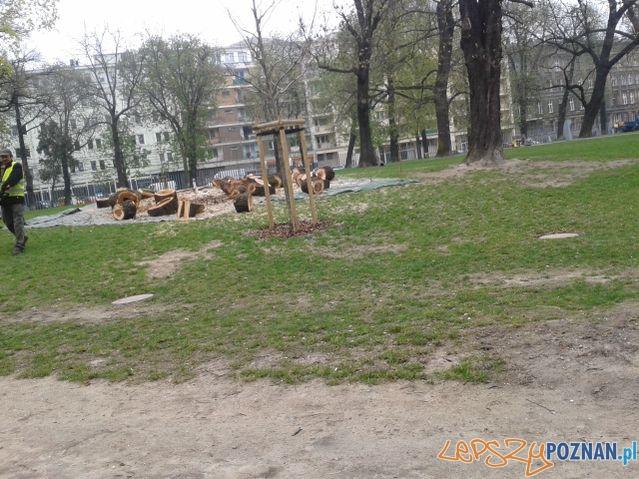 Wycinka drzew przy Starym Browarze  Foto: Michał Patelka