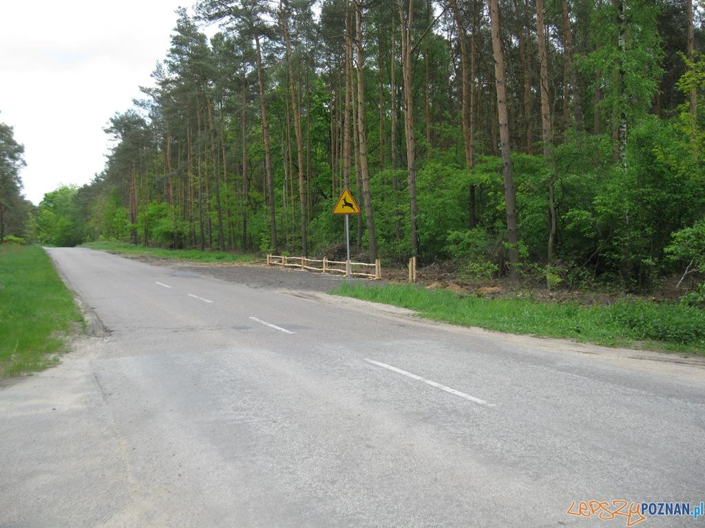 Parking leśny  Foto: Straż Miejska Miasta Poznania