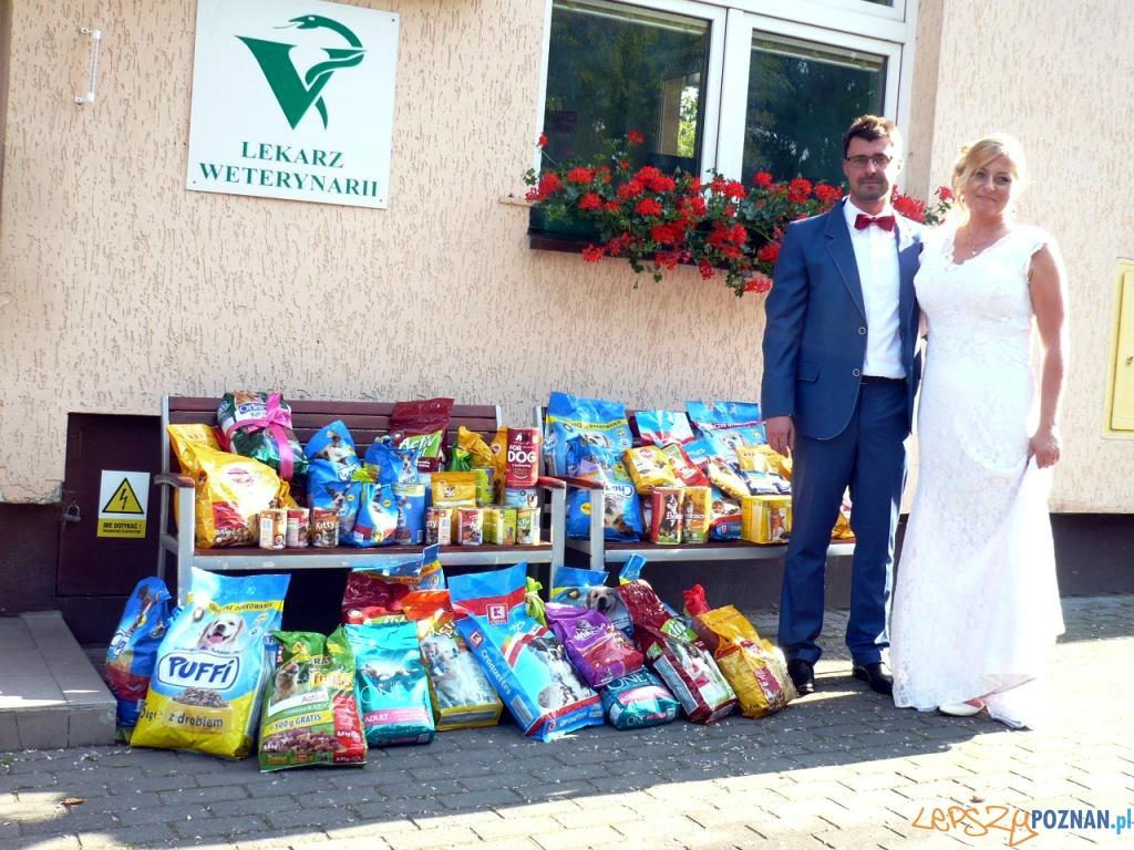 Monika i Michał poprosili swoich weselnych gości, by zamiast kwiatów przynieśli na ich wesele karmę dla zwierząt  Foto: Schronisko dla Zwierząt w Poznaniu