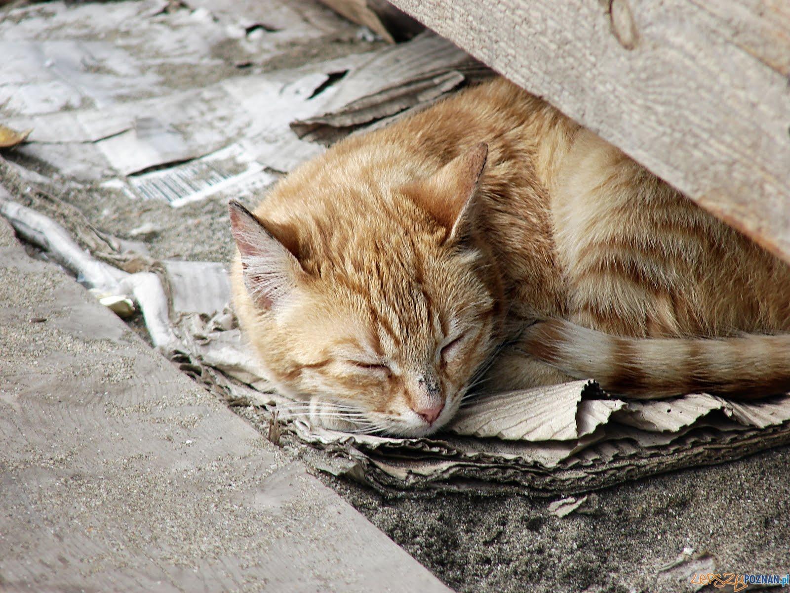 Bezdomne koty  Foto: Towarzystwo Animals