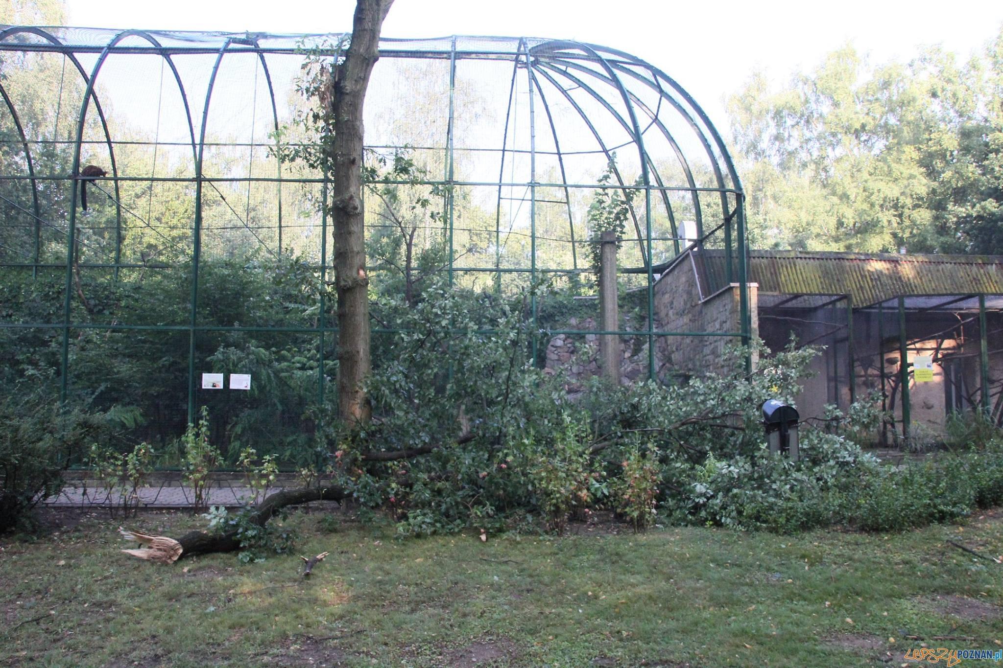 Nowe Zoo po nocnej nawałnicy  Foto: Nowe Zoo