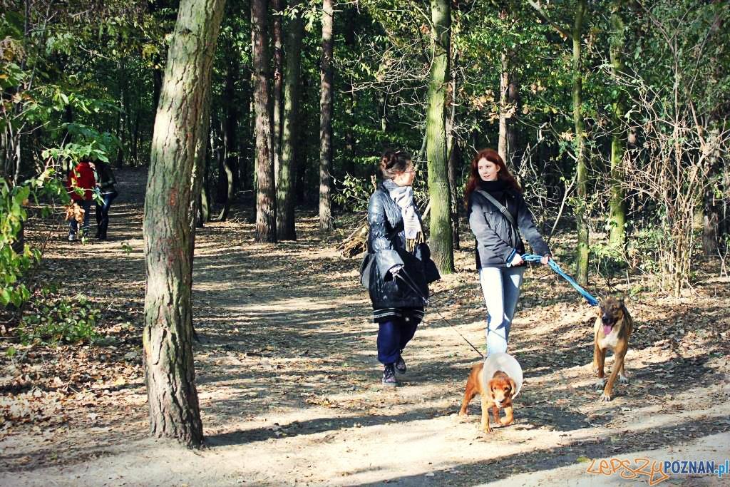 Wyprowadź kejtra ze Schroniska  Foto: Schronisko dla zwierząt w Poznaniu