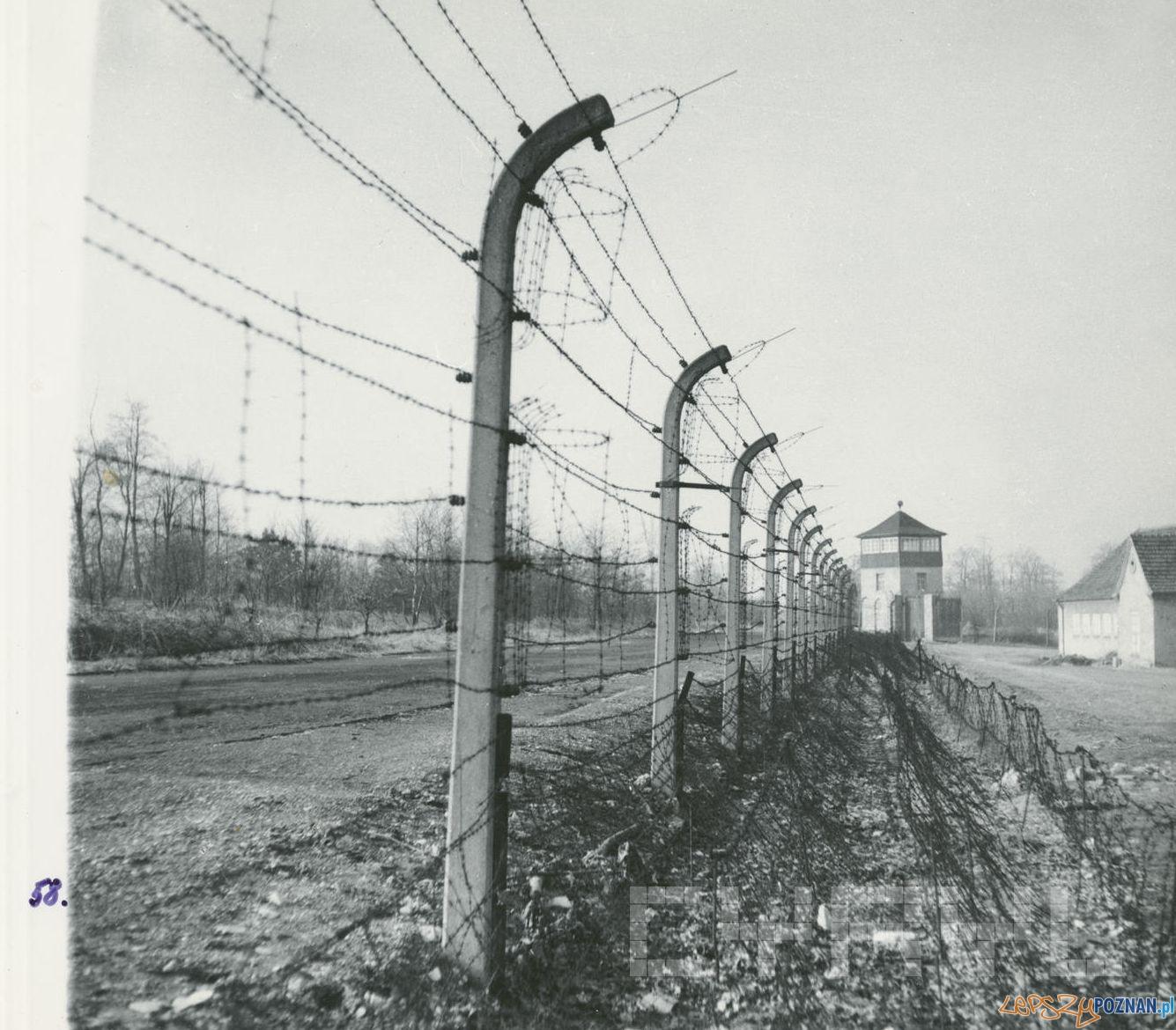Obóz w Żabikowie 1945  Foto: Zbigniew Zielonacki / Cyryl