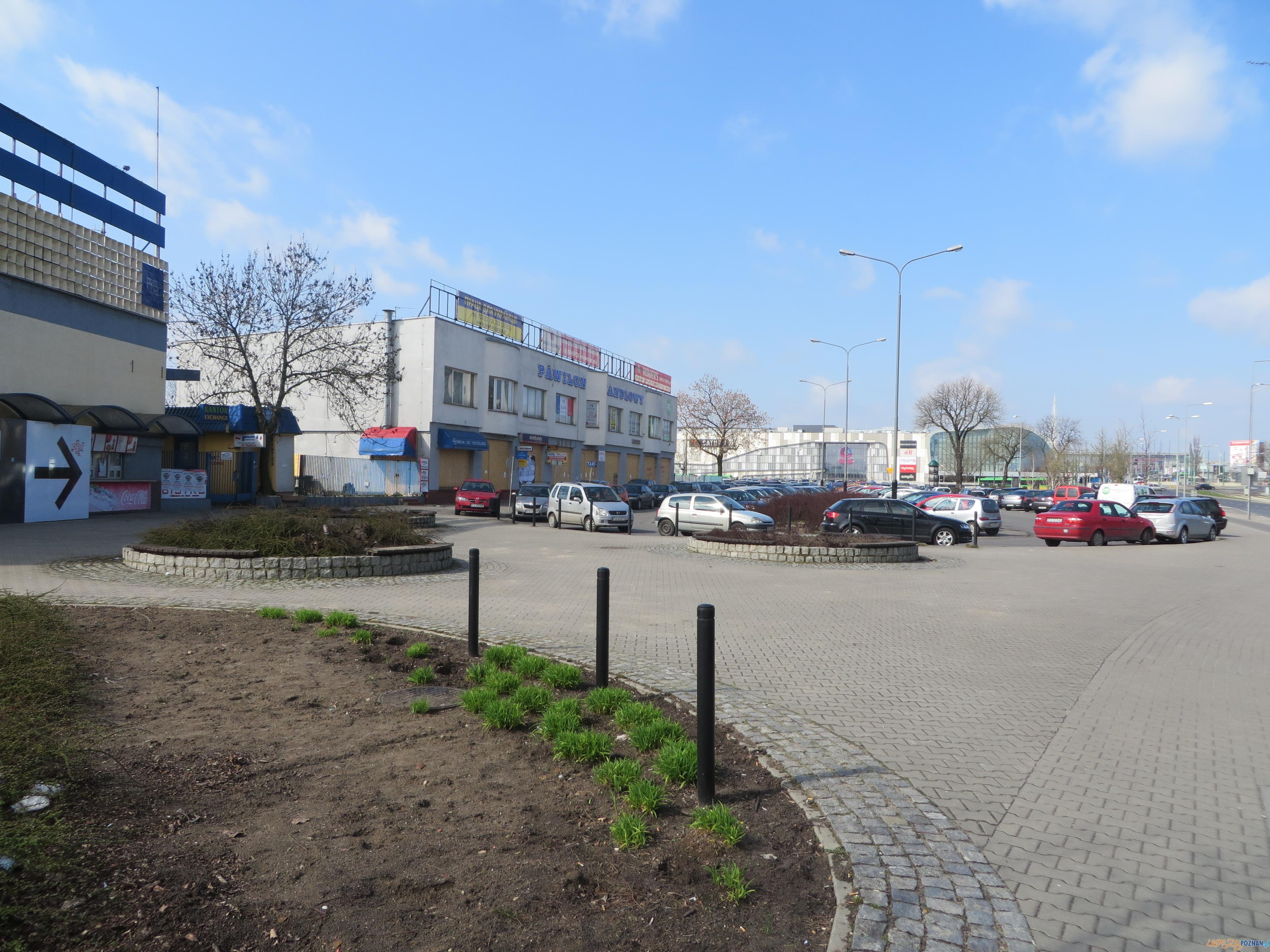Matyi  Foto: UM Poznania