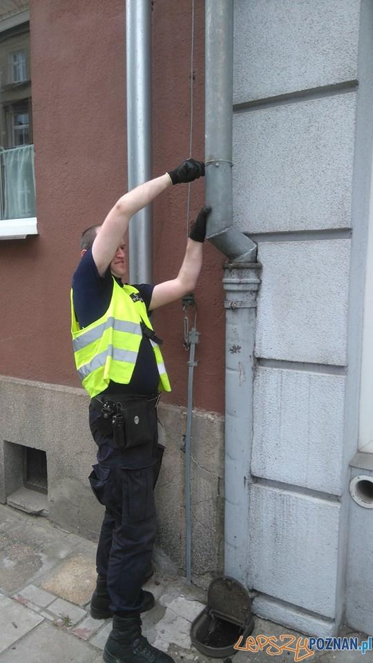Eko-Patrol ratuje uwięzionego gawrona  Foto: Straż Miejska
