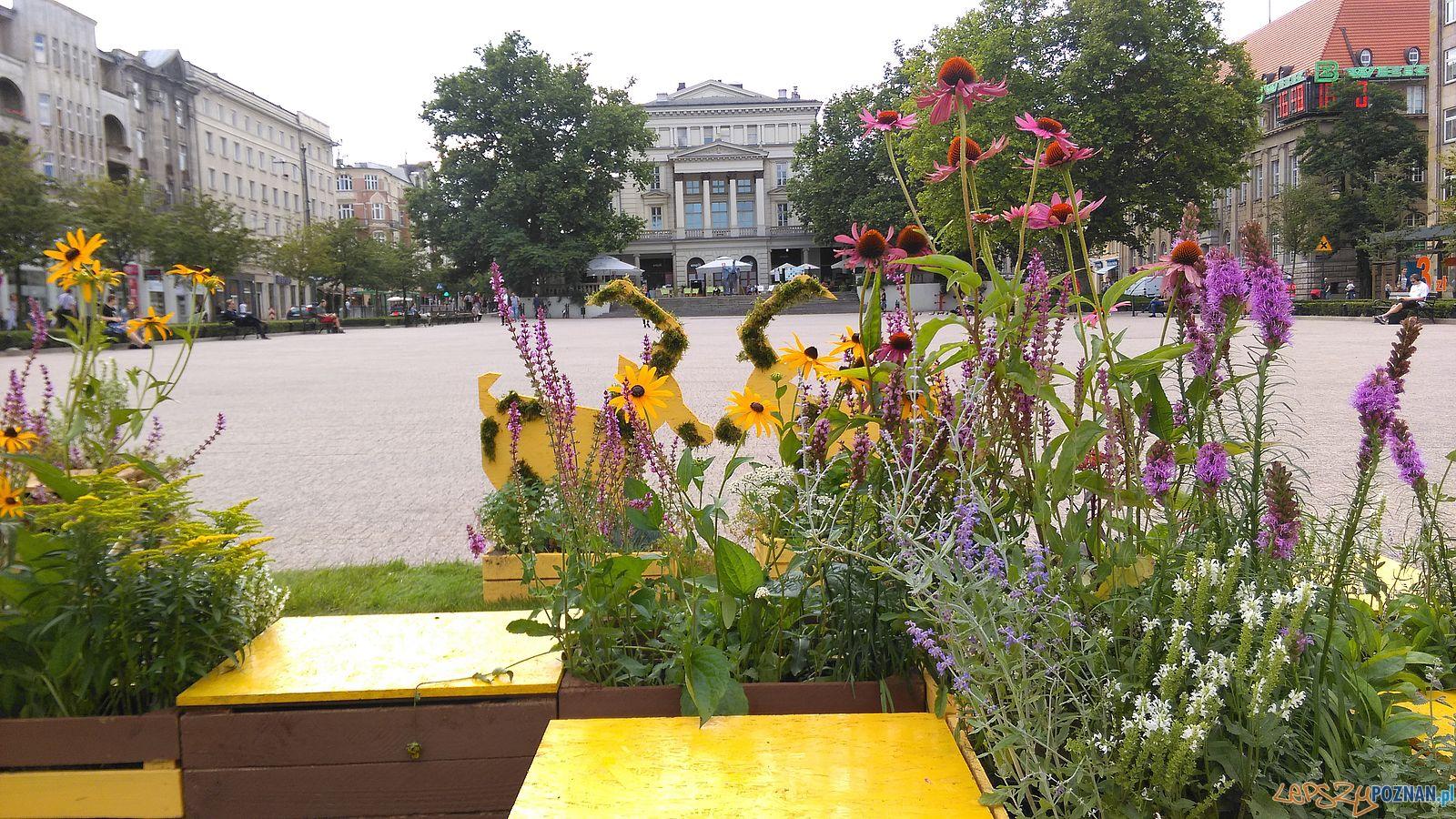 Pomagamy pszczołom - instalacja na Placu Wolności  Foto: