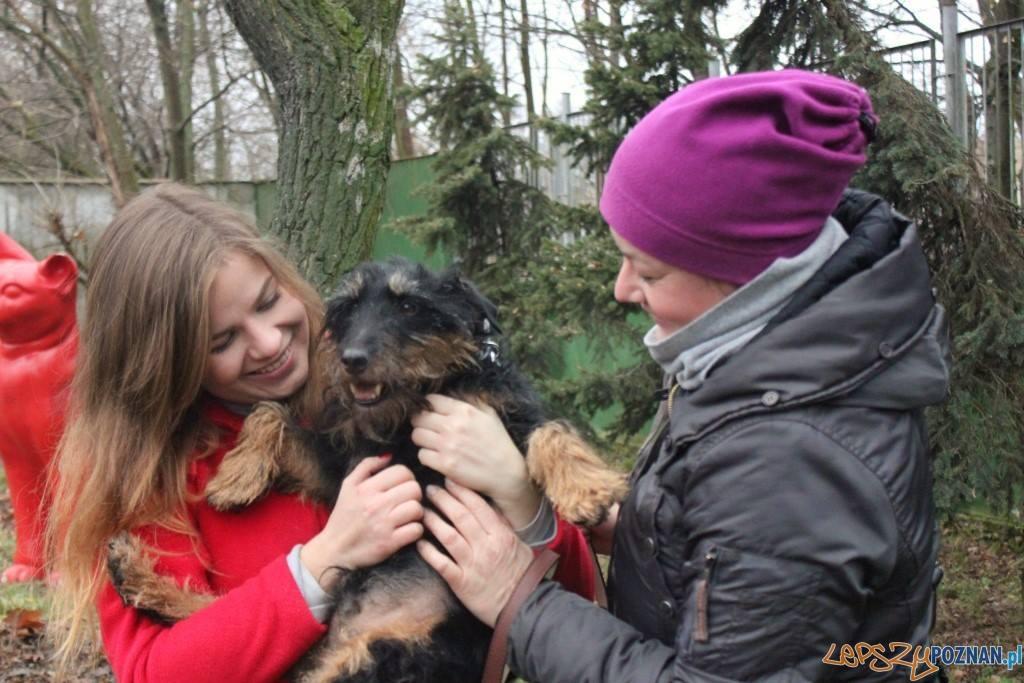Jurgen wrócił  Foto: Schronisko dla zwierząt w Poznaniu