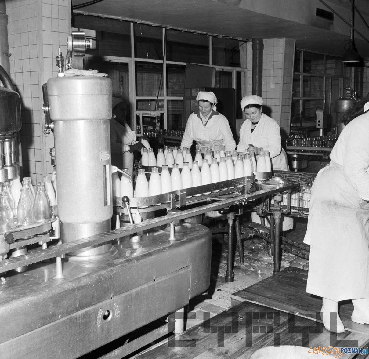 Linia produkcyjna w Spółdzielni Mleczarskiej Dębiec [21.01.1974]  Foto: Stanisław Wiktor / Cyryl