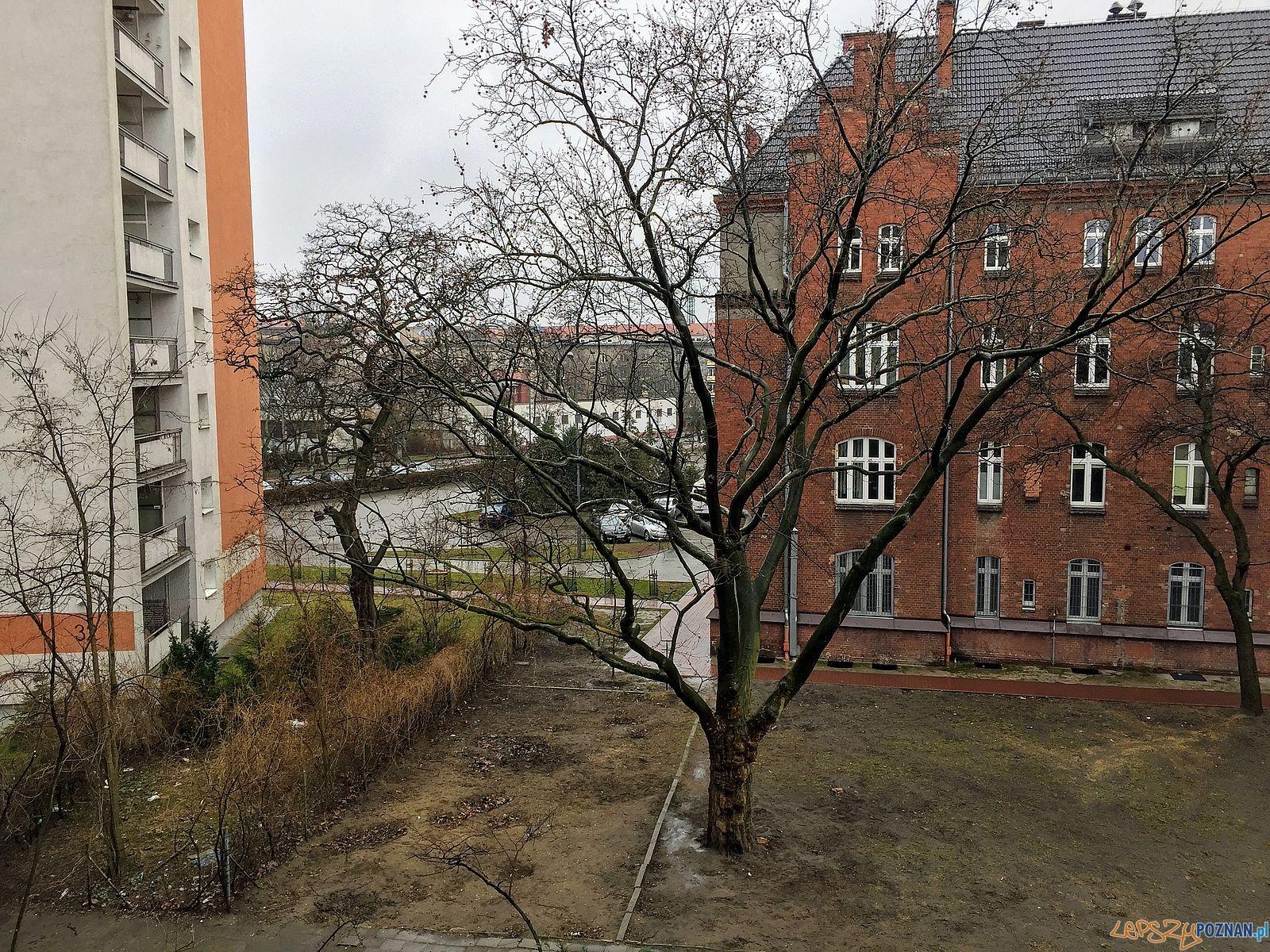 Uratujmy drzewo!  Foto: Marcin Liminowicz / Rada Osiedla Stare Miasto