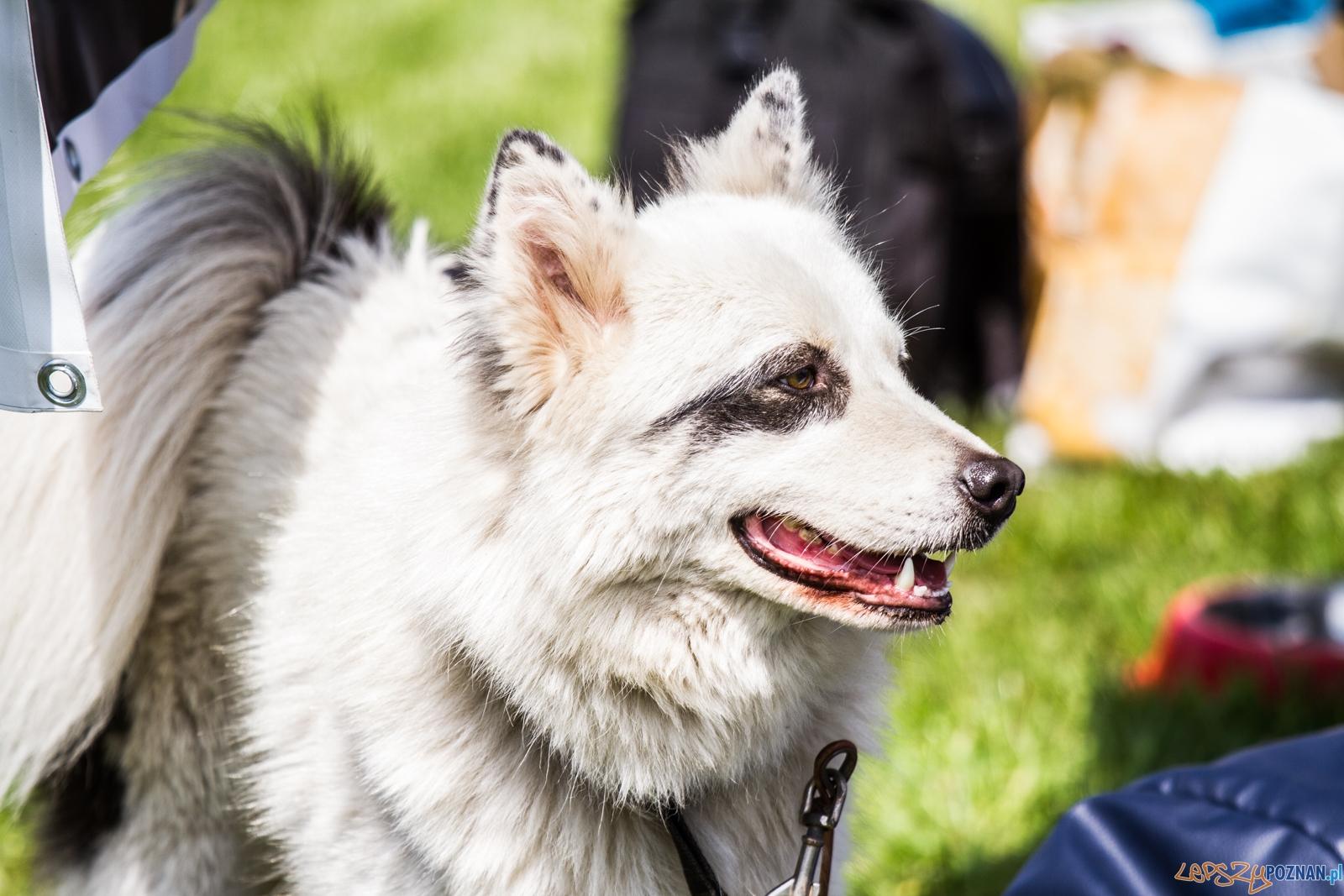 Latające psy (13.05.2017)  Foto: © lepszyPOZNAN.pl / Karolina Kiraga