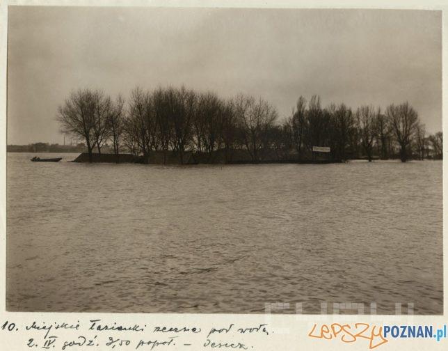 Łazienki Droga Dębińskiej zalane wodami Warty -  2.04.1924  Foto: R.S. Ulatowski / Cyryl