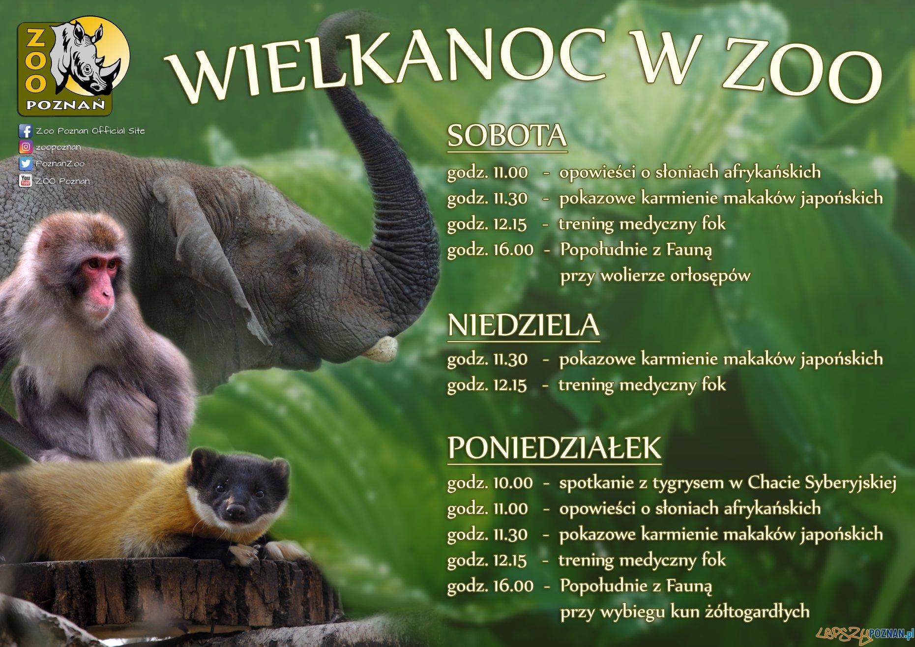 Wielkanoc w Zoo  Foto: materiały prasowe