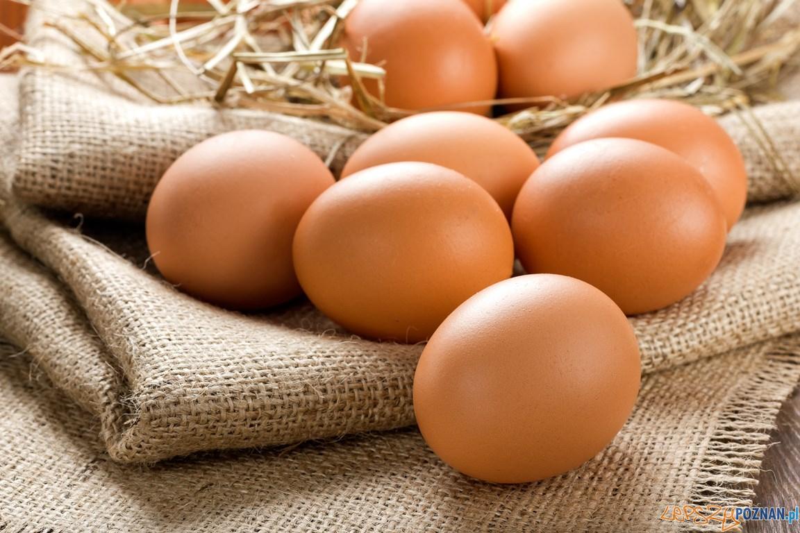 Jaja - jajka  Foto: De Heus - materiały prasowe