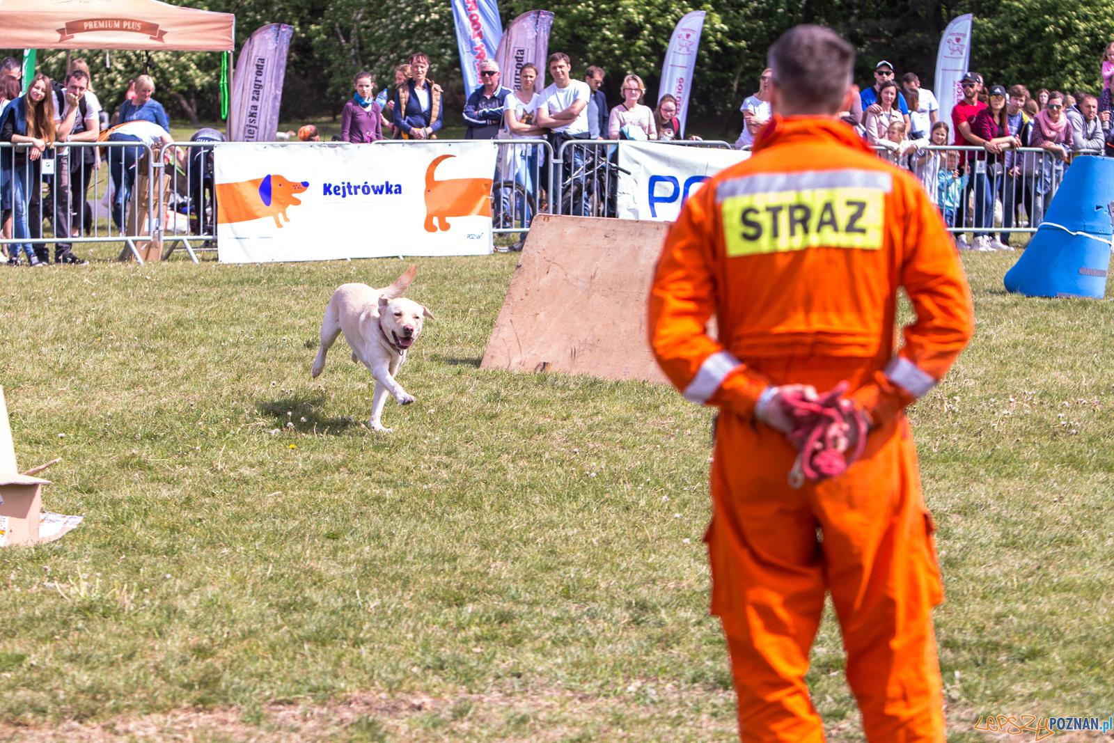 Latające Psy Poznań na Cytadeli - Poznań 11.05.2019 r.  Foto: LepszyPOZNAN.pl / Paweł Rychter
