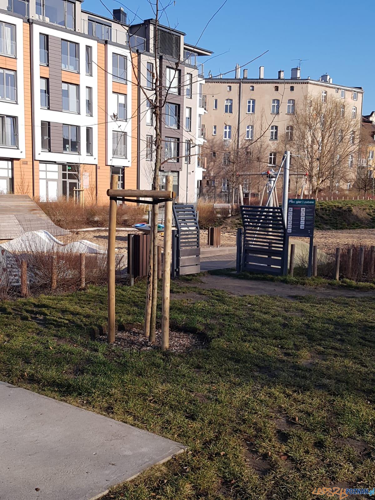 Park Stare Koryto - nowe drzewa  Foto: Zarząd Zieleni Miejskiej